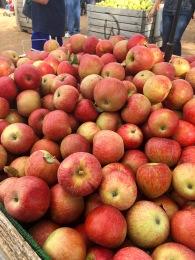 Carter Mountain Orchard.